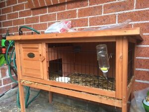 Two baby female Guinea pigs approx three months old, new cage Roselands Canterbury Area Preview