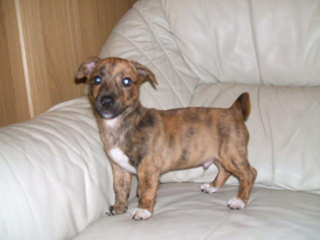 Sale Gumtree Dogs Monchester