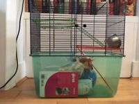 Gerbil cage, exercise ball and carrier - free
