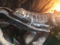 Femail beaded dragon