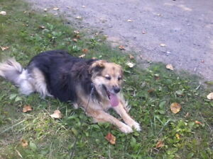 LOST DOG SHANNON