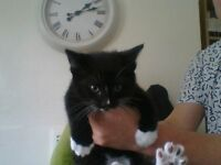 timid black and white male needs loving home eats wet and dry food and is litter trained