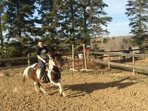 Paint Pony Mare For Sale