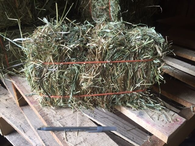 1st cut Timothy hay: Rabbit, Guinea Pig, Chinchilla, etc (discounts avail)