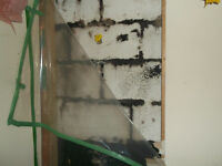 Best and professionals experts in Mold remediation Vancouver
