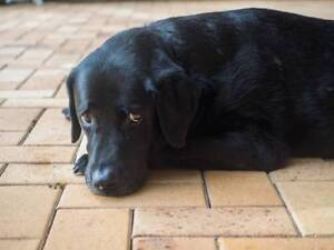 Free to only good home | Dogs & Puppies | Gumtree Australia