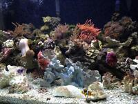 220 gallon salt water Reef fish tank.