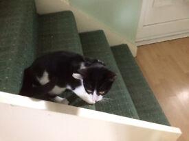 Female kitten 11 weeks £40