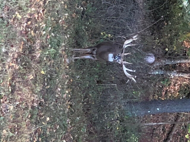 hunting 2020 Trophy Whitetail Deer Hunts Central PA Guided
