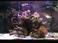 3 Foot Black Aqua One Marine Fish Tank & Livestock & LEDs & marine kits