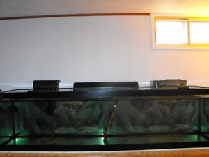 100 Gallon Aquarium for sale