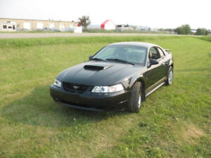 2004 Ford Mustang Hatchback/make a great gift