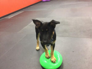 Are you looking for socialization opportunities for your puppy?