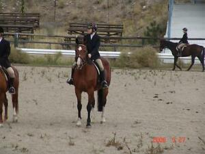 Beautiful Dutch Warmblood available for lease