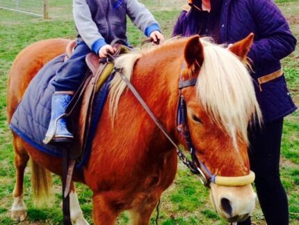 Welsh mountan pony gelding Winchelsea Surf Coast Preview