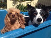 DOG WALKER Dunsborough Busselton Area Preview