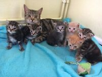 Selection of cute kittens ready soon!