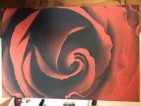 Large - Red Rose Picture