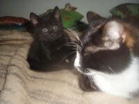 11weeks kitties