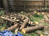 **FREE Tree Logs for Decoration / Wood Burner Fires**