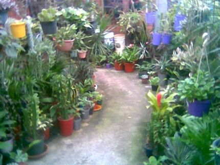 Cheap plants and fruit trees  Bayswater Bayswater Area Preview