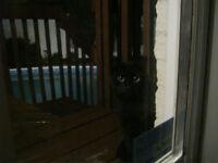 Joli chat noir mâle à donner! M. Noiraud