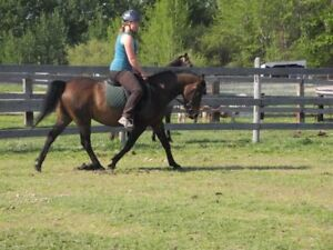 Experienced Pony for Part Lease
