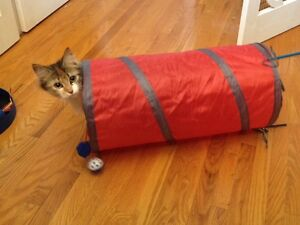 Cat boarding at very reasonable rates Kitchener / Waterloo Kitchener Area image 2