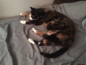 Looking for 1 pet-friendly apartment room near Sheridan Sept1st