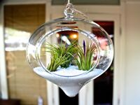 Canadian Air Plants