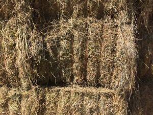 Hay !! Beefmans Special
