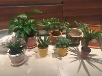 Indoor plants (Aloe Vera, Peace Lily, Spider Plant,Cactus,Cycl) and plant pots, Collect from Fulham