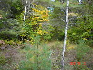 looking for privacy ?Perfect to put your trailer / cabin on Gatineau Ottawa / Gatineau Area image 3