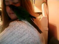 je peux  adopter 3 oiseaux vite derniere adoption apres terminer