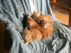 Free kittens ready for adoption