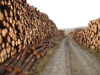 Morpeth Firewood Logs