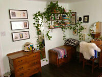 Beautiful 2-bedroom in Chinatown / Little Italy for Sept 1