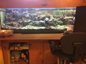 Self-sustaining 120 gal Saltwater Aquarium