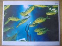 2 x Pictures Of Fish From Sea Life Gt Yarmouth