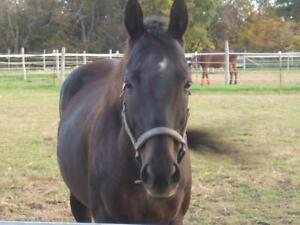 Looking for Info on My Old Mare
