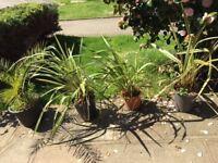 x4 palms/ferns plants