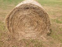 Hay for Sale - 4ftx4ft - baled 15/08/16 - £20 per bale