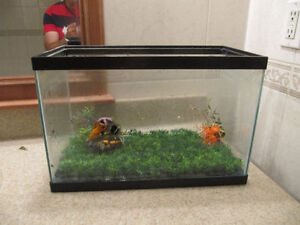 5.5 Gallon fish tank with heater and decoration
