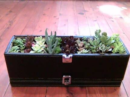 Rustic faux black leather case of mixed succulents