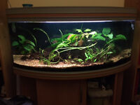 Tropical Aquarium with Stand and accessories