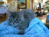 Beautiful Barn Kittens..