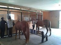 Horse Grooming Apprenticeship