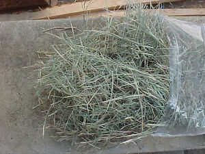 Baled hay/straw & pine shavings delivered 4 your small animals Stratford Kitchener Area image 9