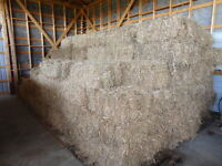 Miscanthus straw bales