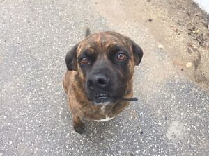 URGENT: LOOKING FOR A DOG LOVING HOME
